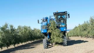 Recolección de olivar en seto