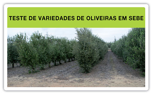 Ensayo_de_variedades_pt