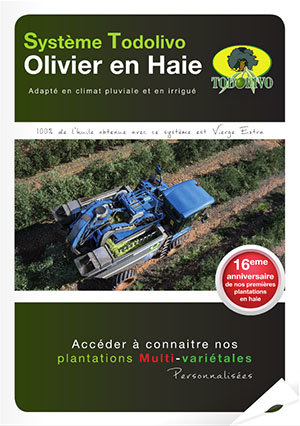 Olivar_FR