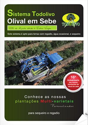 Olivo_PT