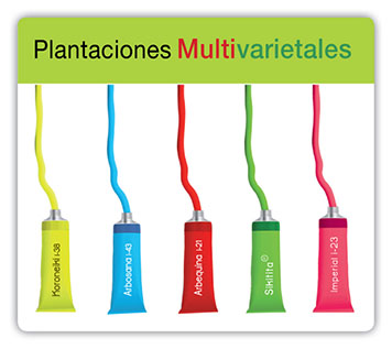 Plantaciones_multivarietales