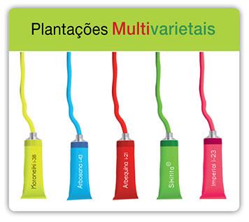 Plantaciones_multivarietales_pt