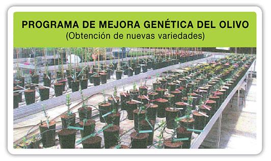 Programa-mejora-genetica