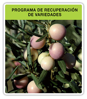 Programa-recuperacion-variedades