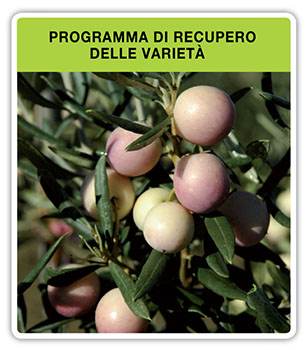 Programa-recuperacion-variedades_it