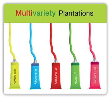 Todolivo_Multivariety-plantations