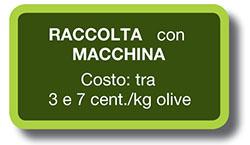olivar-de-verdeo-seto-1_it