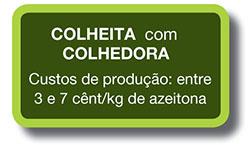 olivar-de-verdeo-seto-1_pt