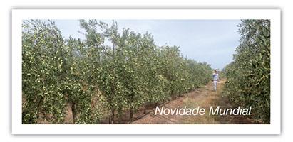 olivar-de-verdeo-seto-2_pt